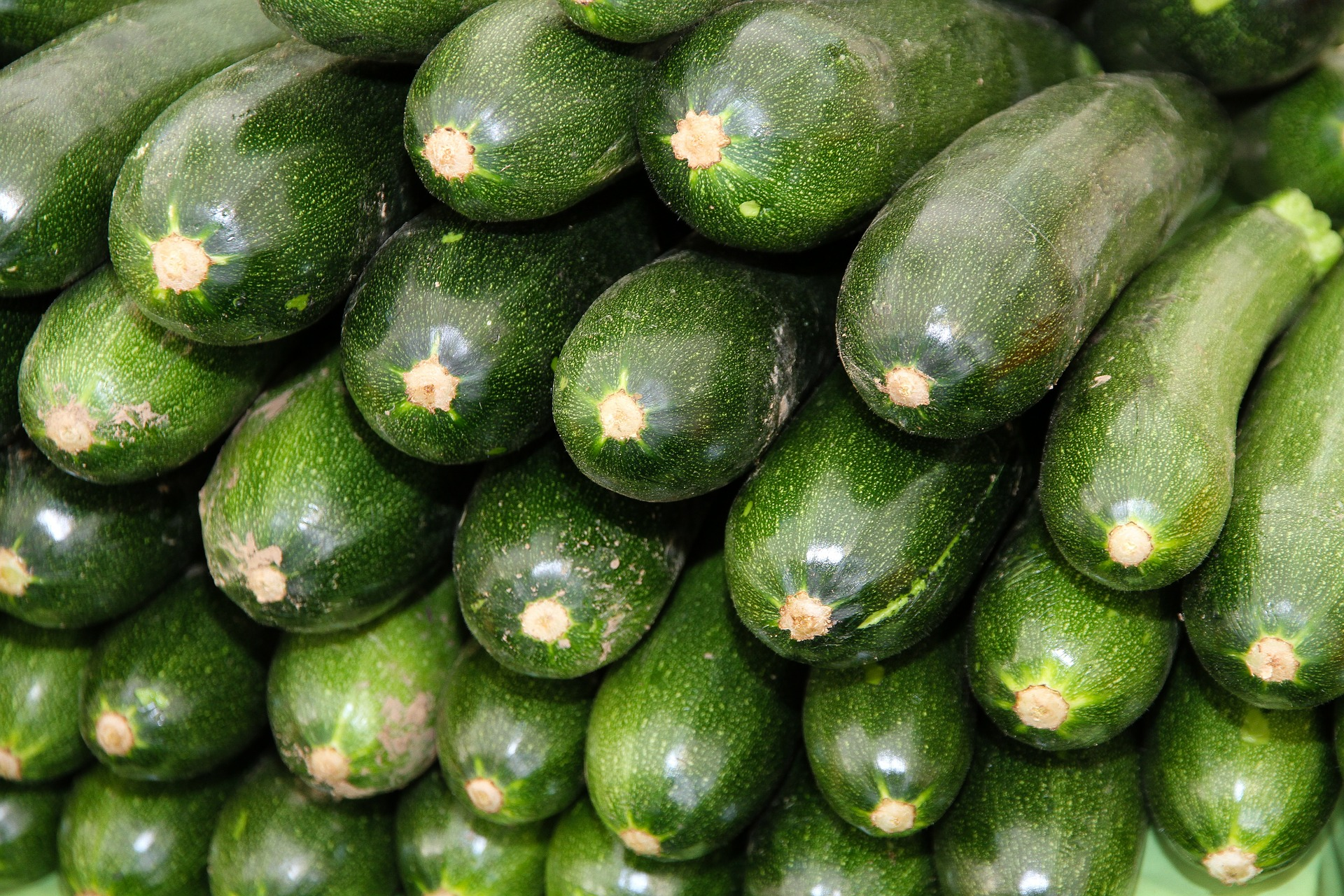 zucchini scuri