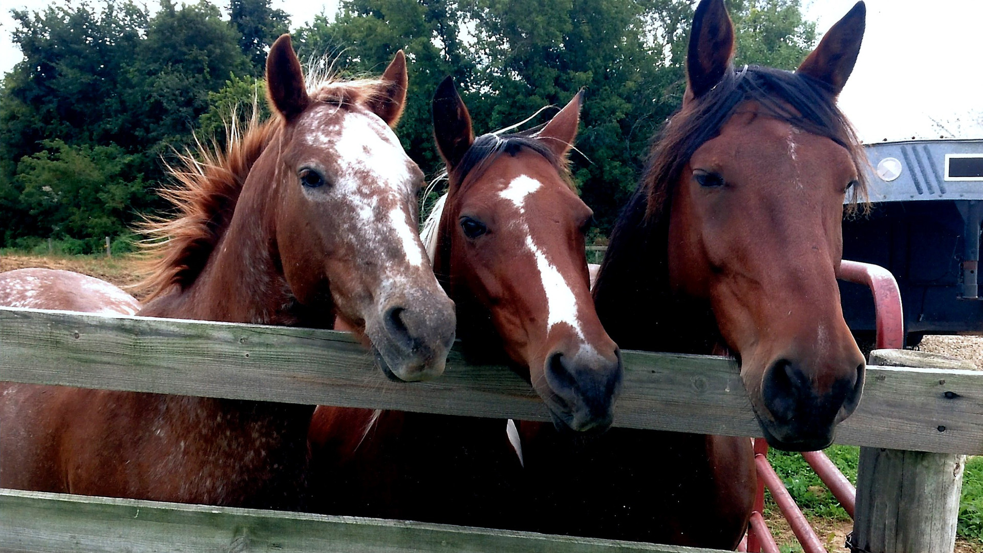 Sharis-Horses.jpg