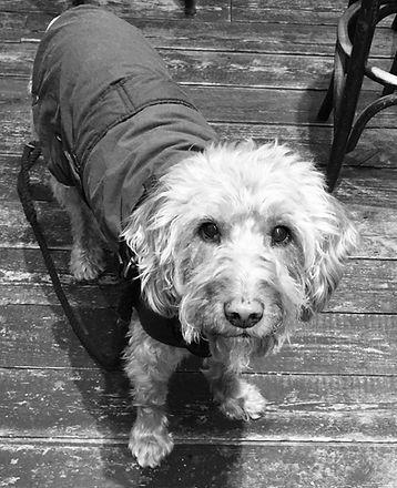 Ollie Dog.jpg