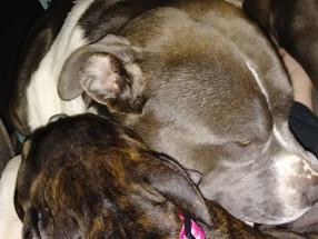 Pet Protection Ritual