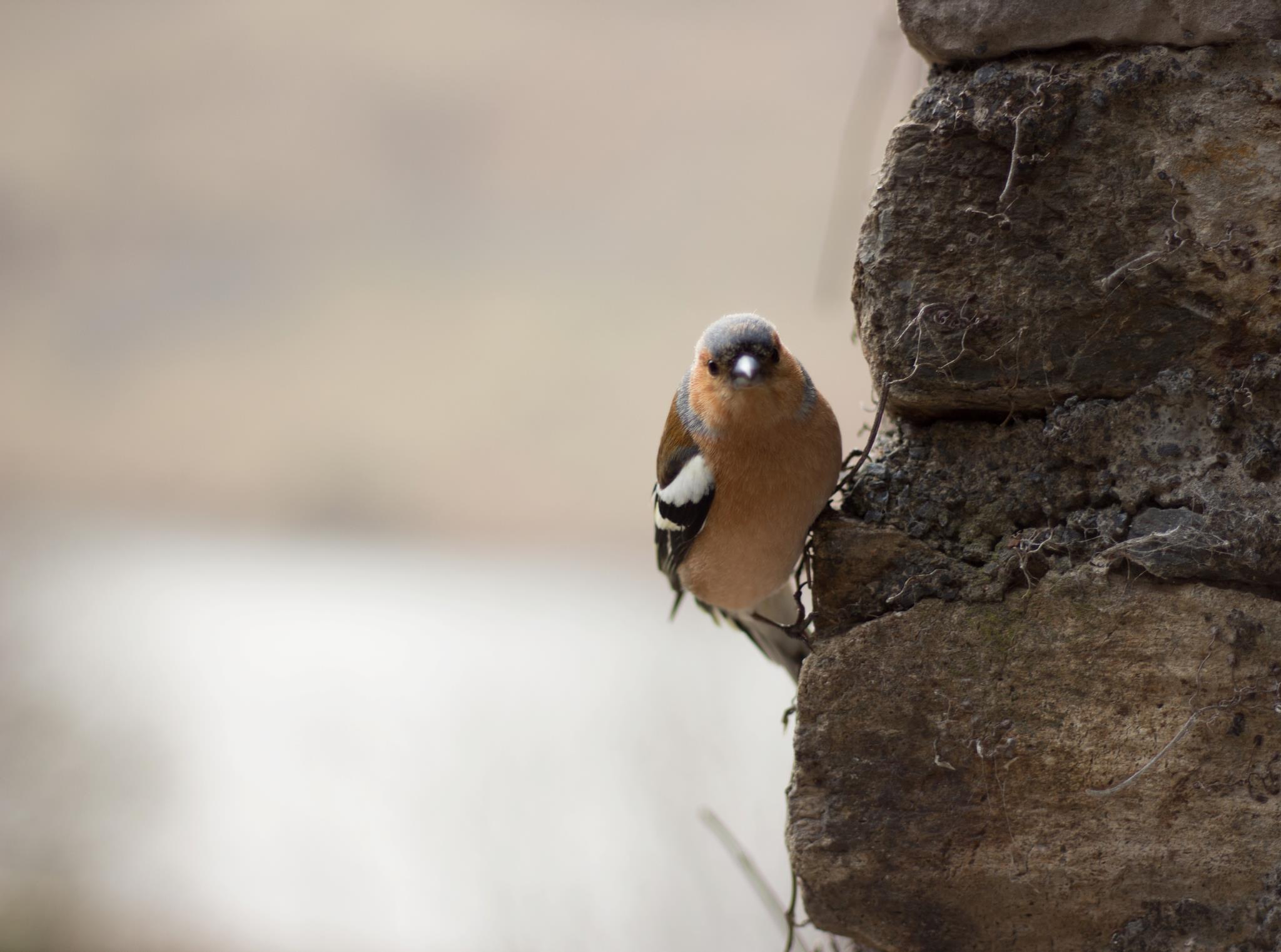 Bird-life in abundance