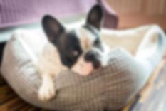 Lavado de camas mascota