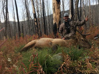Solo backpack hunting Idahos Selway zone
