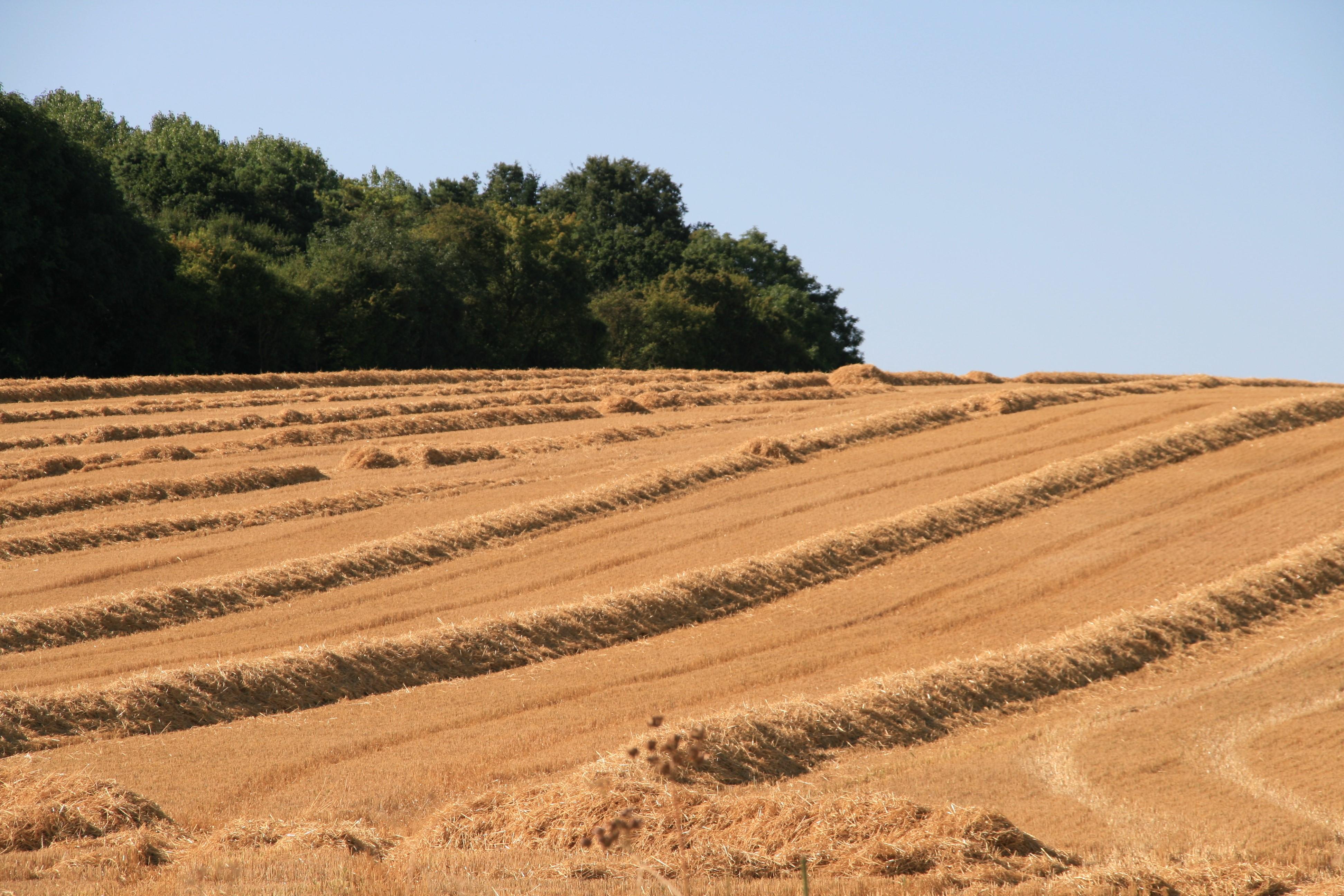 After harvest.jpg