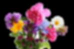 AdobeStock_211538049-removebg-preview (1