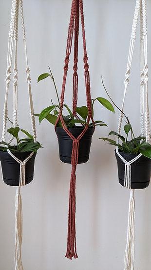 Macrame Plant Hanger +  Hoya