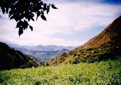 Our Farm vista desde la finca