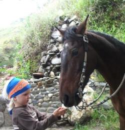 Our Farm caballo
