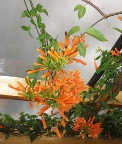 Our Farm flores naranjas