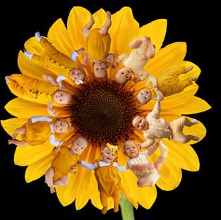 Sunflower Black Background - Mumma Bears