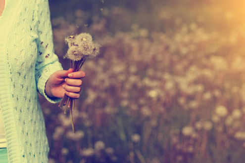 Woman with bunch of dandelion flowers in