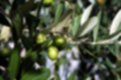 Olives Extra