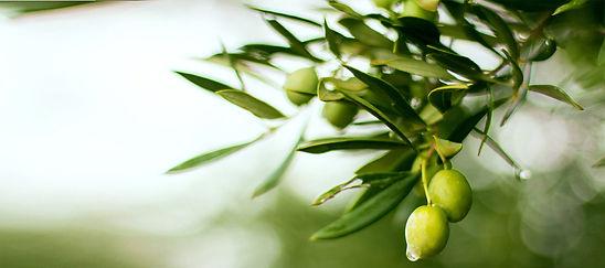 fond-olive6.jpg