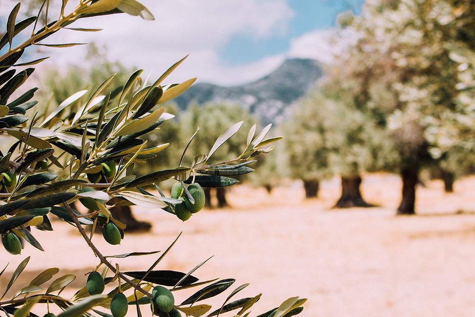 olivier-de-la-ferme.jpg