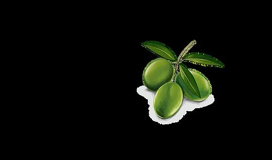 olive-dessin3.png