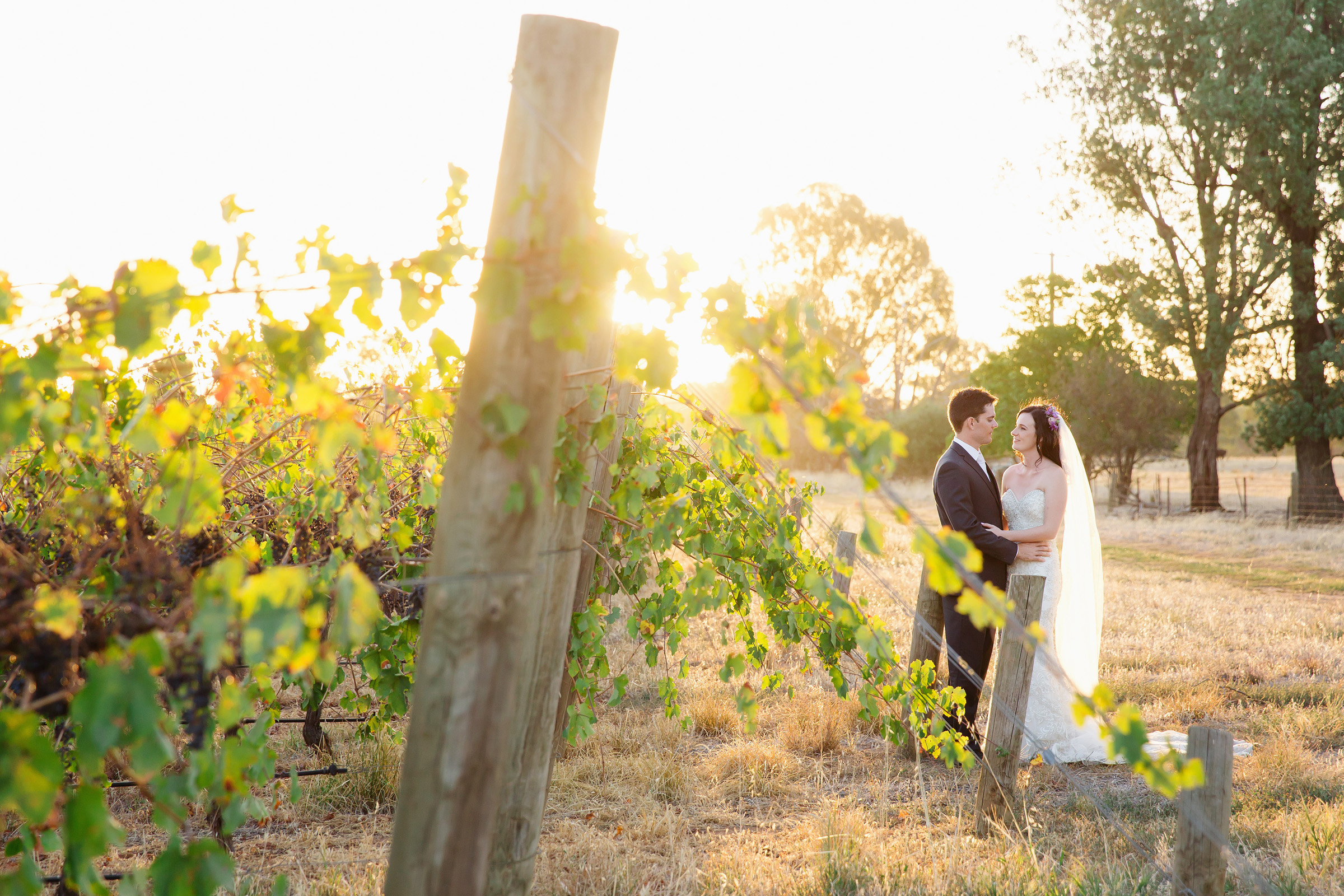 Romantic moment in the vineyard