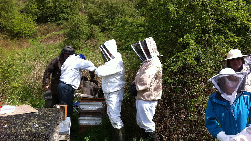 Beginners Intensive Course in the Apiary 17th June