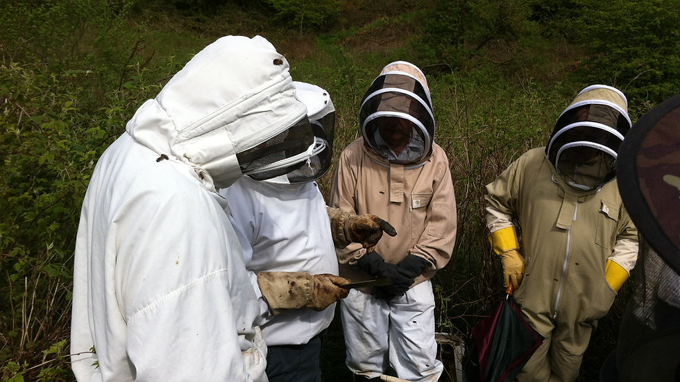 Spend a day with a beekeeper