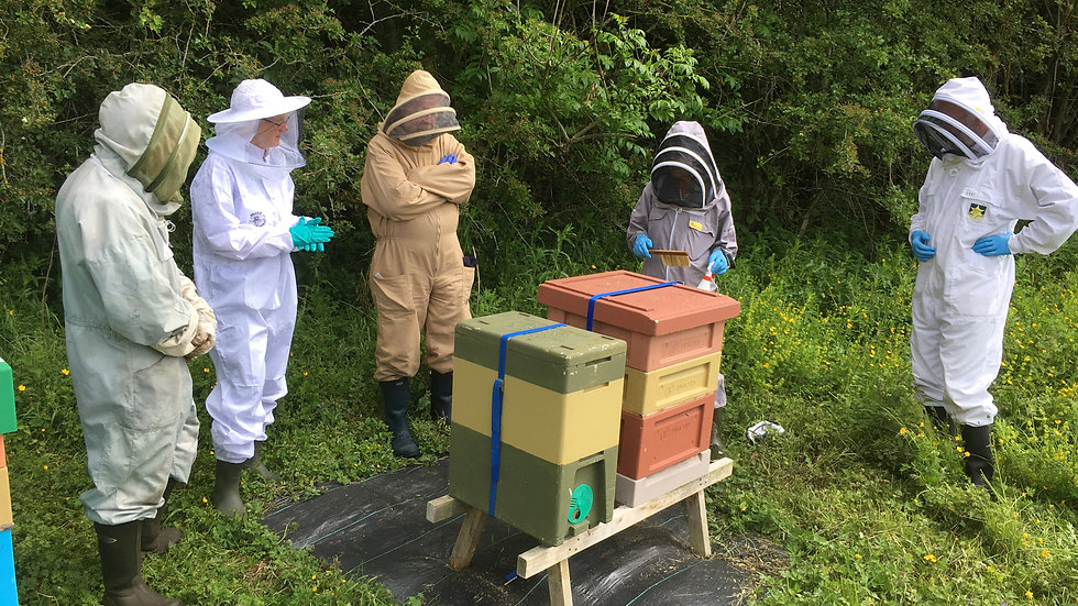Taster Day Course and Apiary Visit 19th July 2020