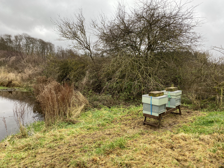 Checking the hives after a windy couple of days