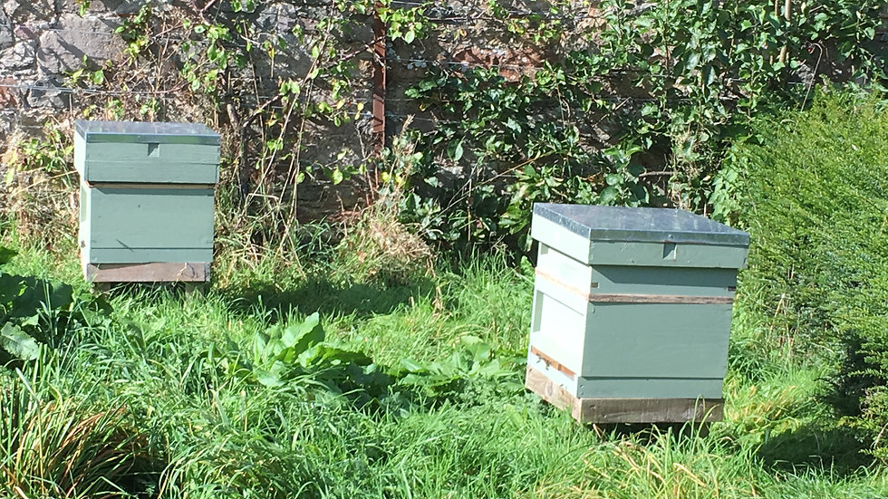 On-line Beekeeping Course