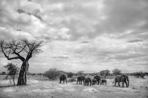afrikatembo_photo02.jpg