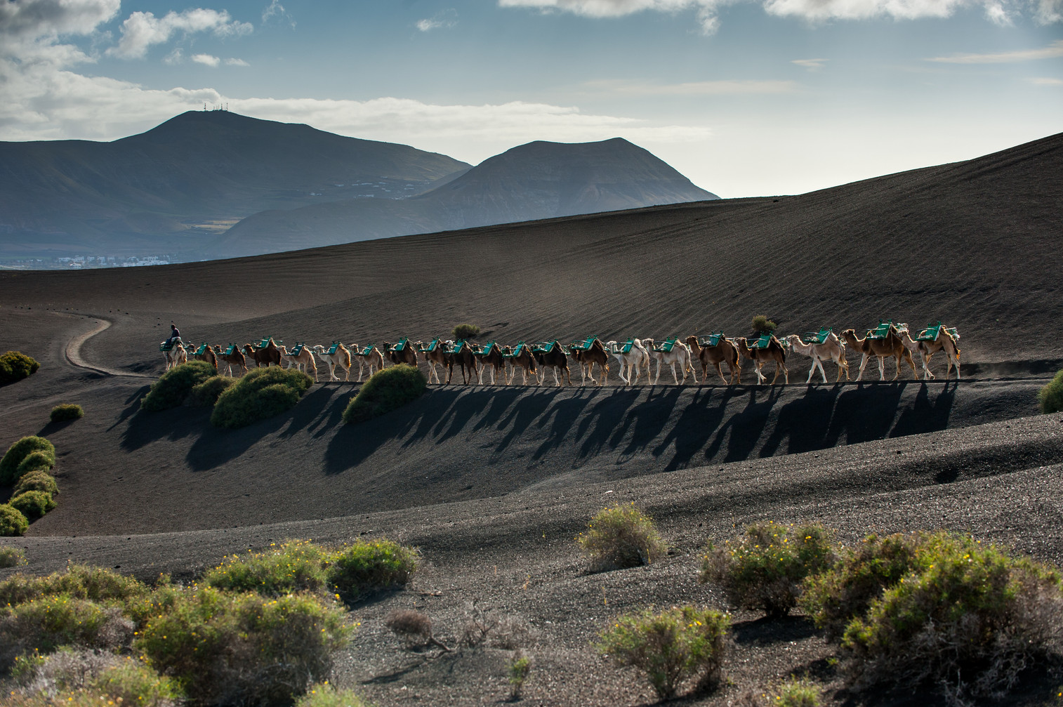 Camel convoy going back home at Timanfaya National Park - Lanzarote - Canary Islands (Spain)