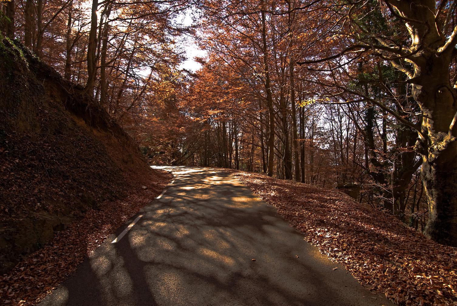 Beautiful road in fall, at Montseny (Spain)