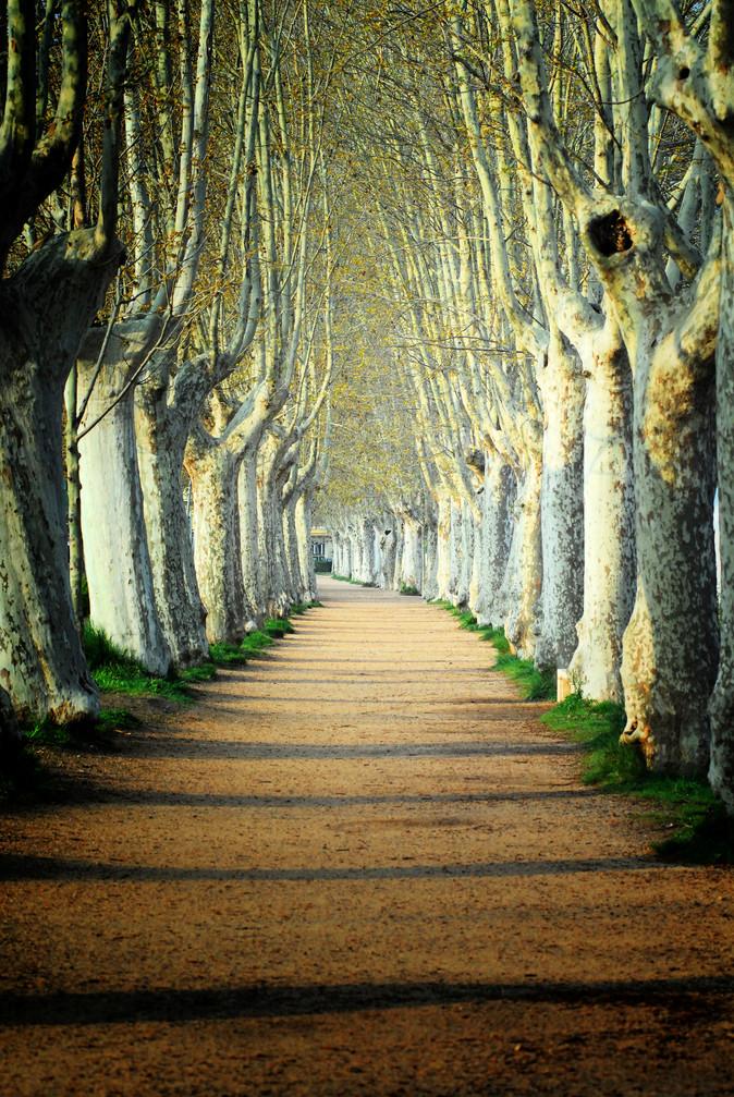 Tree road at Banyoles (Spain)