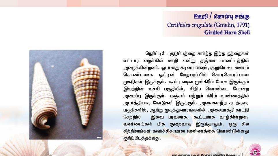 41 - 48_Page_7.jpg