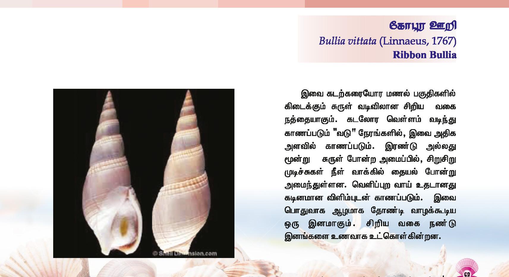 57 - 64_Page_7.jpg