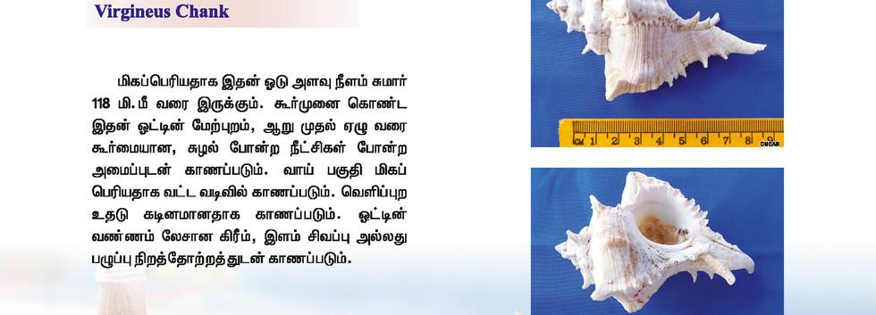 25 - 32_Page_8.jpg