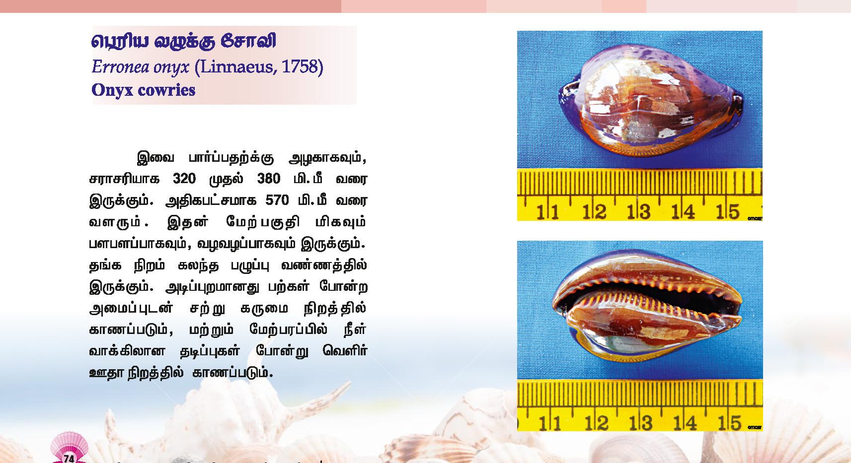 73 - 80_Page_2.jpg