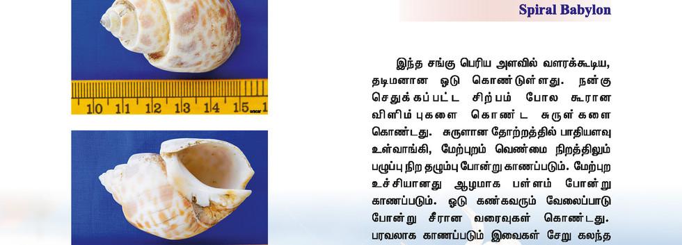 57 - 64_Page_5.jpg