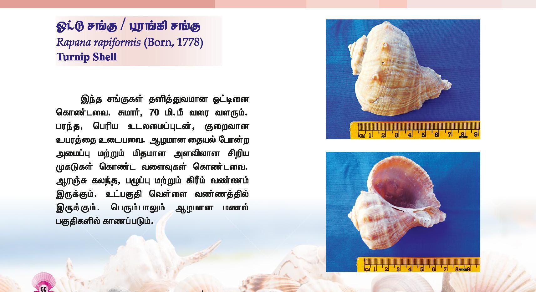 65 - 72_Page_2.jpg