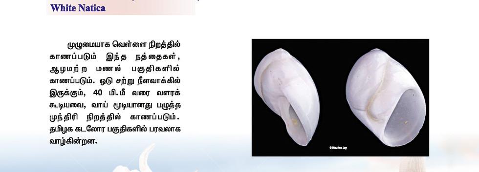 33 - 40_Page_8.jpg