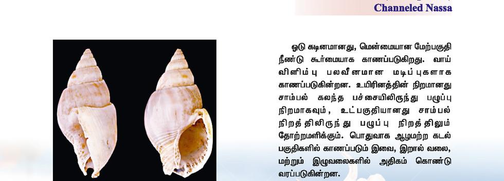 33 - 40_Page_7.jpg