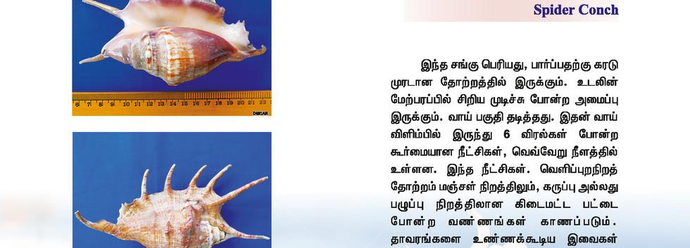 41 - 48_Page_5.jpg