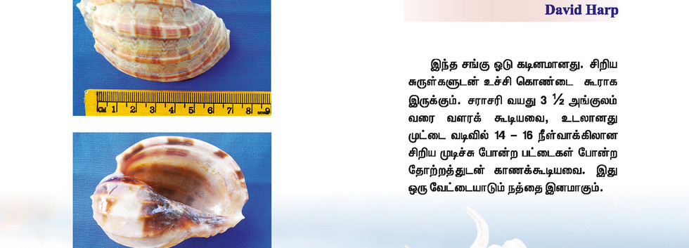 65 - 72_Page_5.jpg