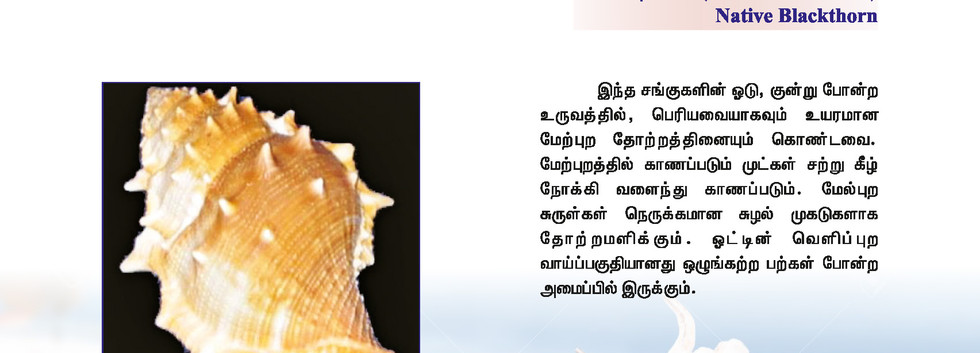 25 - 32_Page_7.jpg