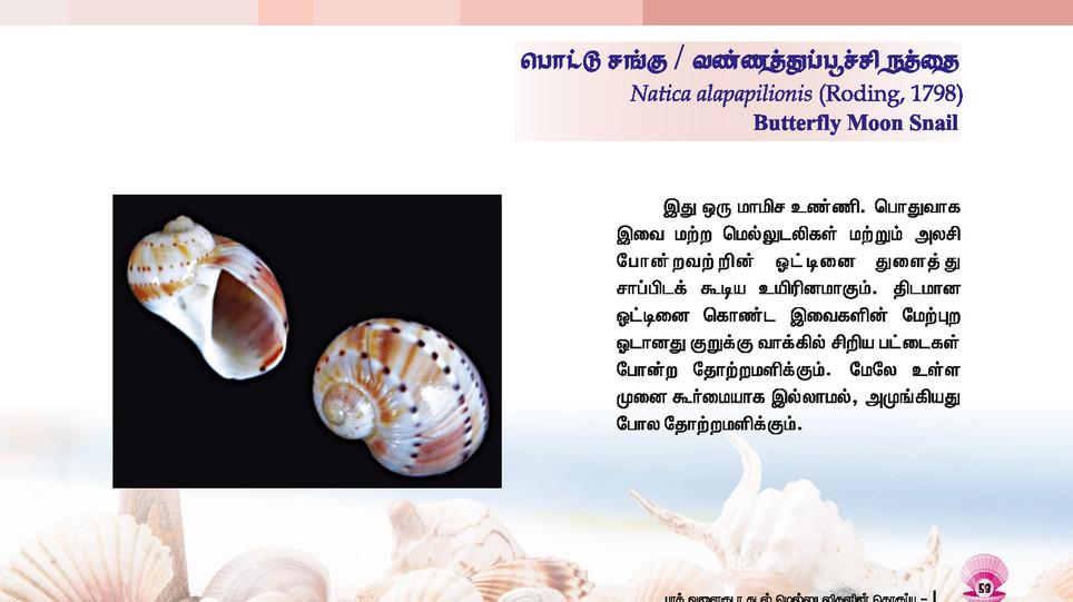 49 - 56_Page_5.jpg