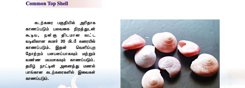 25 - 32_Page_2.jpg