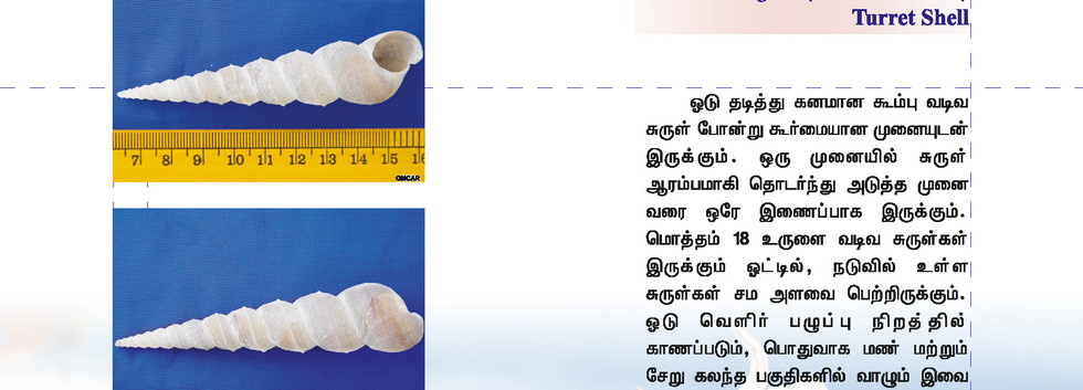 49 - 56_Page_1.jpg