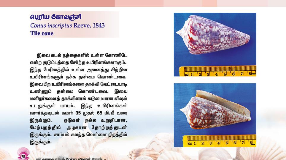65 - 72_Page_8.jpg