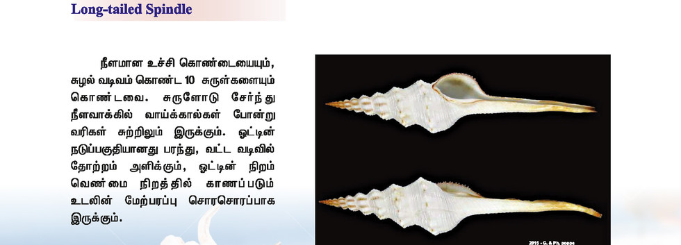57 - 64_Page_8.jpg