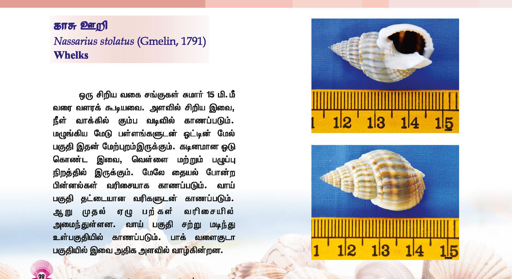 33 - 40_Page_6.jpg