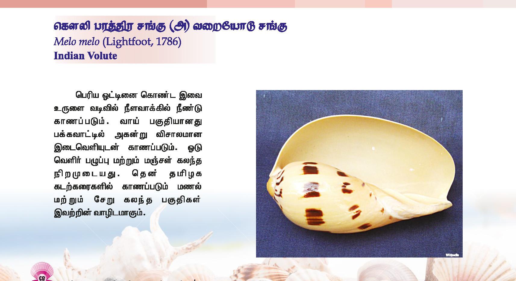 65 - 72_Page_4.jpg