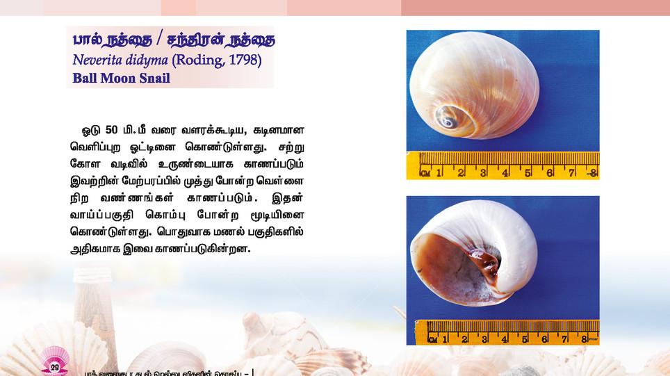 25 - 32_Page_4.jpg