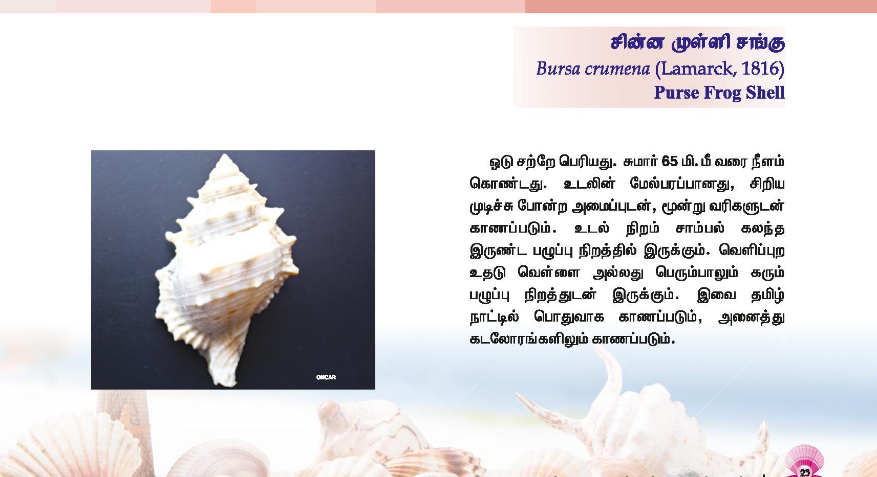 25 - 32_Page_5.jpg