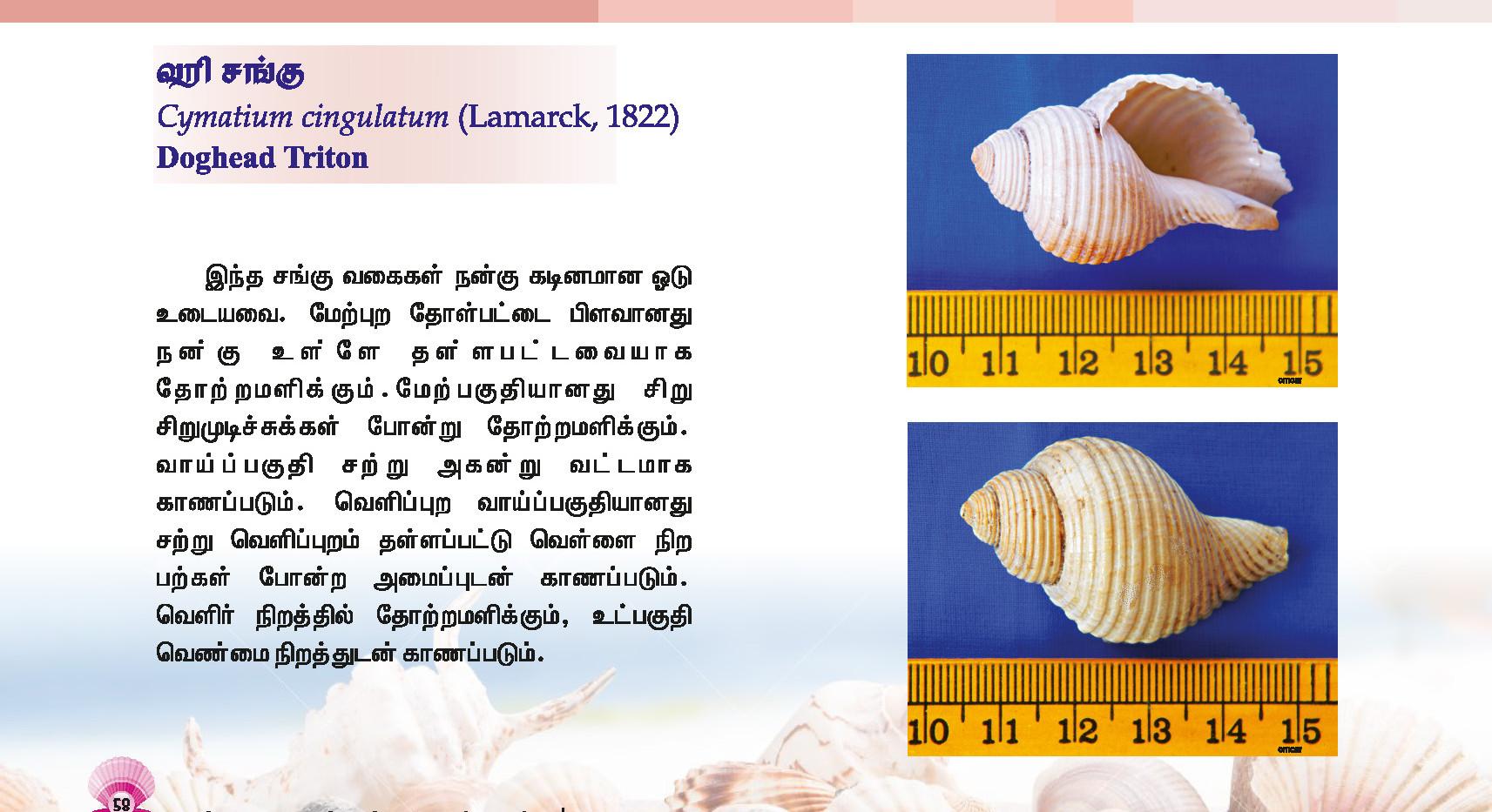 57 - 64_Page_2.jpg